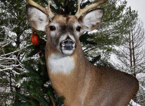 My Little Buck in Snow
